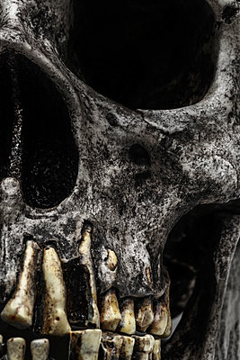 Skull - p1280m1214181 by Dave Wall