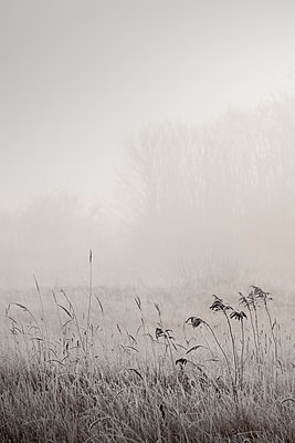 Heavy fog in the countryside - p739m1119395 by Baertels