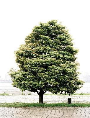 Baum in Japan - p7510006 von Dieter Schwer