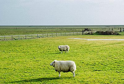 Terschelling polder - p1132m1020443 by Mischa Keijser