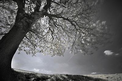 Tree in the backlight - p1137m932528 by Yann Grancher