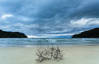 Branch washed up on a beautiful beach at the Abel Tasman National Park after a storm; Nelson, New Zealand - p442m1499809 by Nicola M Mora