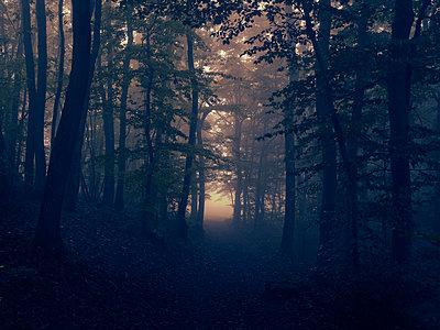 Wald im Nebel - p1312m1137659 von Axel Killian