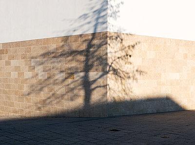 Schattenwurf eines Baumes - p171m1541734 von Rolau