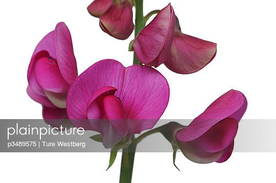 p3489575 von Ture Westberg