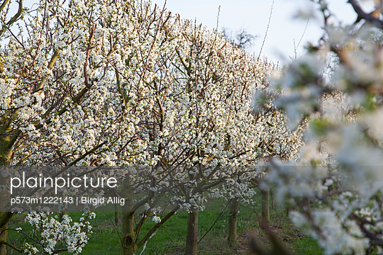 p573m1222143 by Birgid Allig