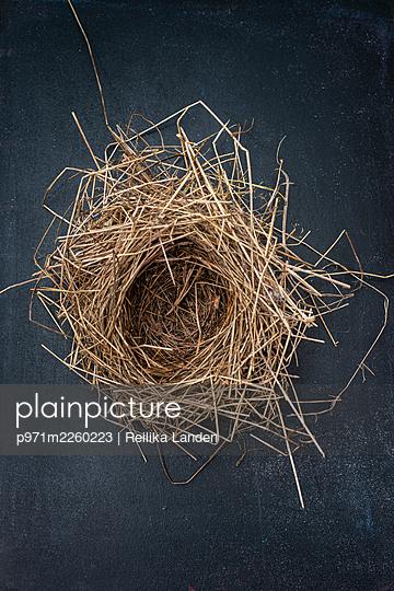 Bird´s nest - p971m2260223 by Reilika Landen