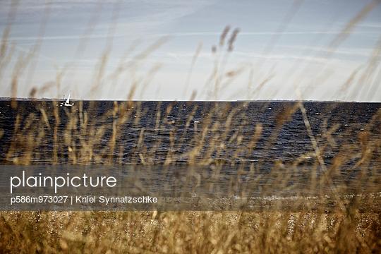 Blick durch Schilf an der Küste bei Helsingör - p586m973027 von Kniel Synnatzschke