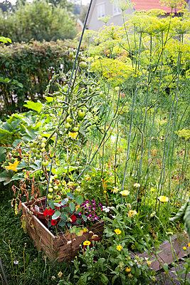 Vegetable patch - p312m996761f by Lena Granefelt