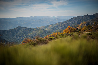 Mountain and forest in autumn - p1007m1144444 by Tilby Vattard