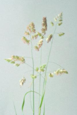 Grasses - p1072m905449 by Caro Boulton