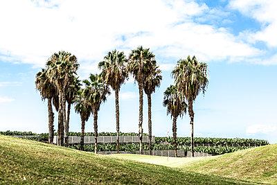 Bananenplantage - p1367m1573648 von Teresa Walton