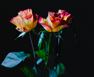 Three roses - p1088m937943 by Martin Benner