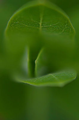 High angle view of green leaves - p1166m1544801 by Cavan Social