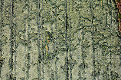 Aerial view of grainfield after rain, snapped plant and straigt tractor tracks - p300m1113316f by Klaus Leidorf