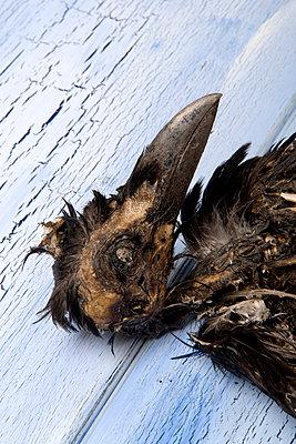 Krähenkopf - p451m1143437 von Anja Weber-Decker