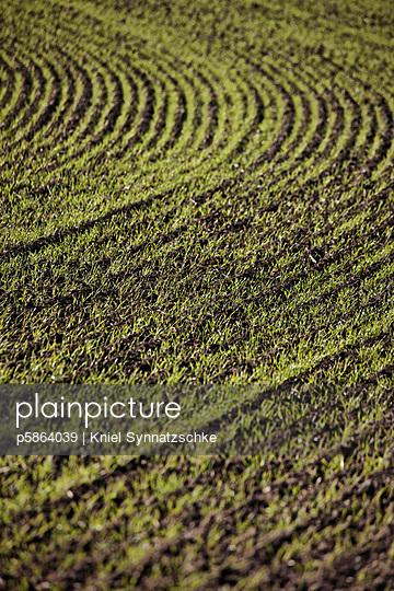 Fruchtbar - p5864039 von Kniel Synnatzschke