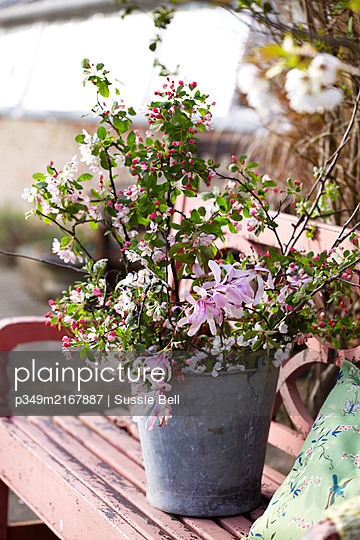 Outdoor spring floral decorations on pink painted garden bench in preparation for an Easter party. - p349m2167887 by Sussie Bell