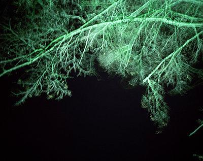 Insomnia - p945m791452 von aurelia frey