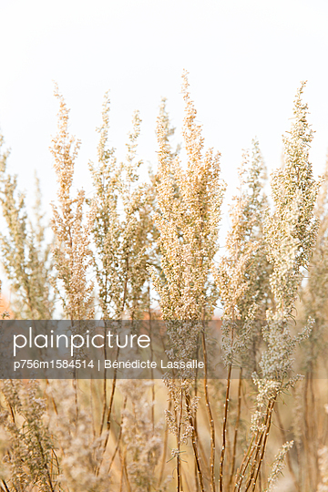 Plants - p756m1584514 by Bénédicte Lassalle