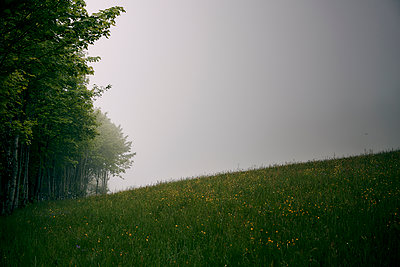 Meadow and piece of forest in the fog - p1312m2285133 by Axel Killian