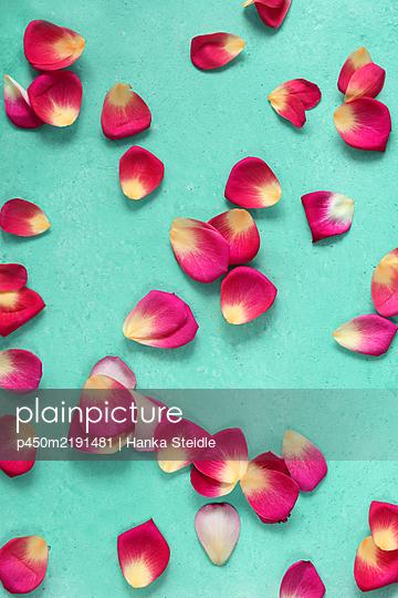 Rose petals - p450m2191481 by Hanka Steidle