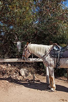 Pferd - p712m1541260 von Jana Kay