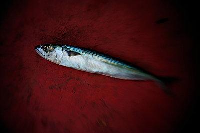 Fisch auf dem Trockenen - p8290093 von Régis Domergue