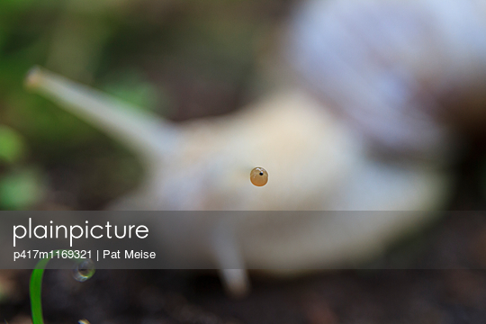 Snail - p417m1169321 by Pat Meise