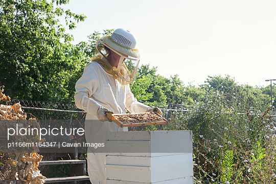 Female worker wearing protective suit while examining beehives at farm - p1166m1164347 by Cavan Images