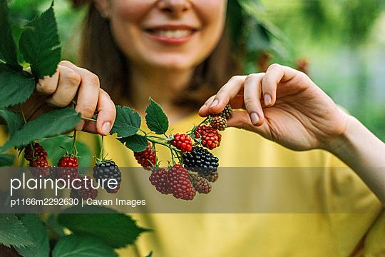 woman harvesting blackberries from plants at farm - p1166m2292630 by Cavan Images