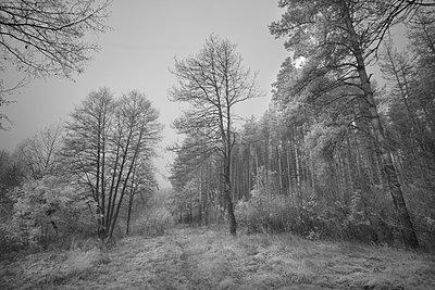 Landschaft in Russland - p1653m2232301 von Vladimir Proshin