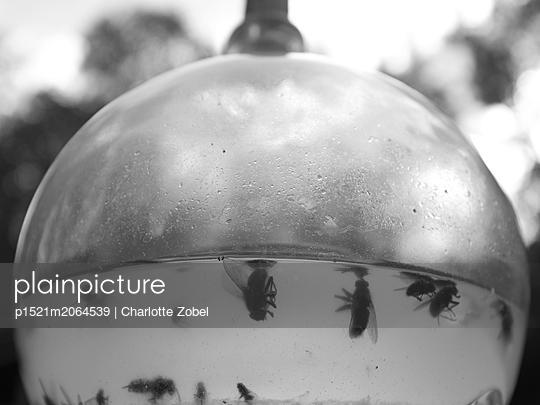 Dead flies - p1521m2064539 by Charlotte Zobel