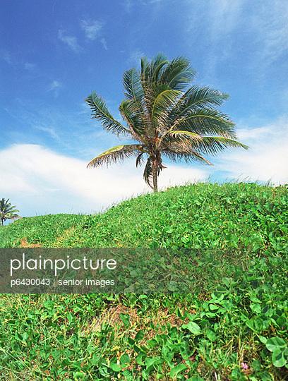 Palme am Stadtstrand von Havanna  - p6430043 von senior images