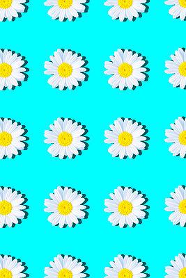 Marguerites - p1149m2187947 by Yvonne Röder