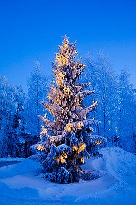 Spruce in sunlight - p4266217f by Tuomas Marttila
