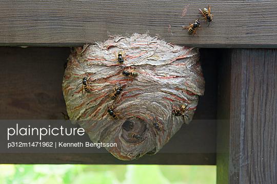 p312m1471962 von Kenneth Bengtsson