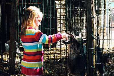 Little girl feeding a goat at a petting zoo - p967m792139 by Wessel Wessels