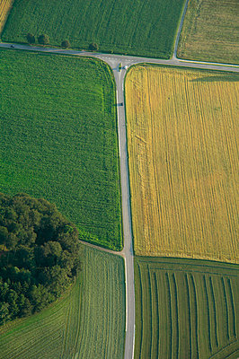 Germany, Bavaria, View of corn fields - p300m752345f by Gerald Nowak