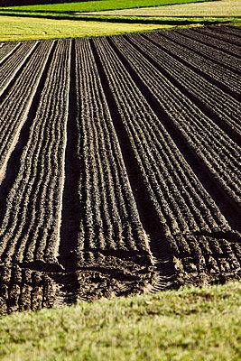 Ackerfurchen - p2280474 von photocake.de