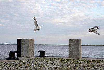 p627m671182 von Hendrik Rauch