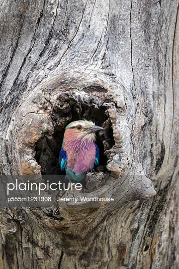Bird nesting in hole in tree