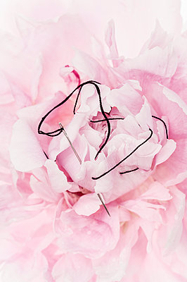 Stitched peony - p971m1462961 by Reilika Landen
