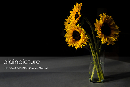 p1166m1545739 von Cavan Social