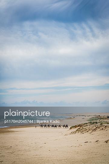 Kamelreiten am Strand - p1170m2045744 von Bjanka Kadic