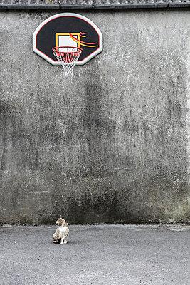 Katze auf einem Spielfeld - p1082m2087560 von Daniel Allan