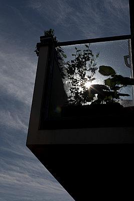 Balkonpflanzen - p212m889764 von Edith M. Balk