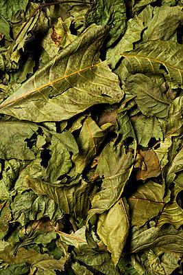 Tea leaves - p947m2071703 by Cristopher Civitillo