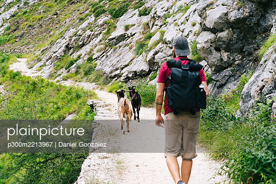 Man with backpack hiking on mountain with goats in background at Ruta Del Cares, Asturias, Spain - p300m2213967 by Daniel González