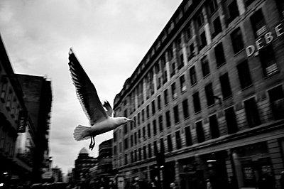 Möwe fliegt durch die Stadt - p1085m855332 von David Carreno Hansen